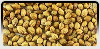 Coriander Seeds, Exporters of Spices, Cumin Seeds, Fennel Seeds, Fenugreek Seeds, Turmeric Fingers