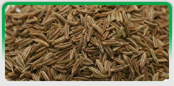 Cumin Seeds, Exporters of Spices, Fennel Seeds, Fenugreek Seeds , Coriander Seeds, Turmeric Fingers